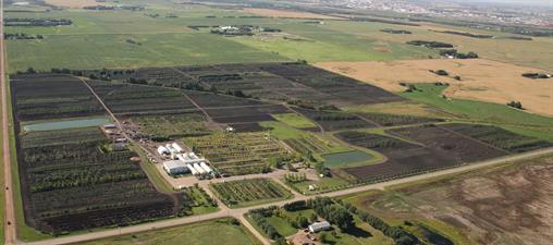 Cheyenne Tree Farms Ltd
