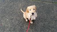 ready for my walk