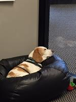 "Meet ""Jax"" office great and Beagle!"
