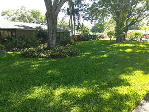 Lawns by EcoFloridian