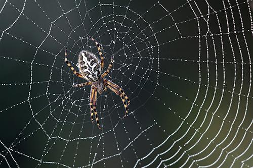 Gallery Image spider(1).jpg