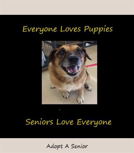 Adopt A Senior Dog or Cat!