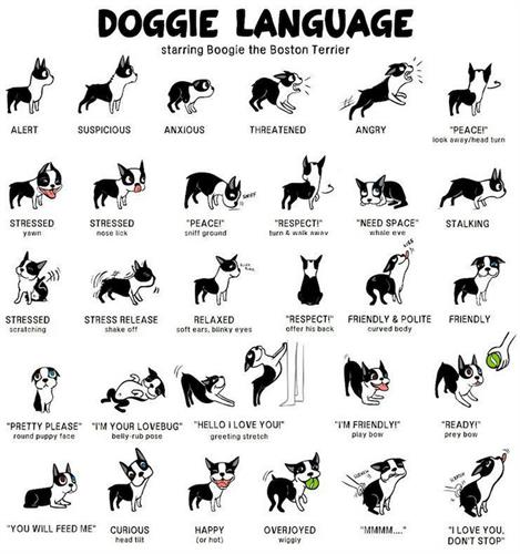 Gallery Image Doggie-Language.jpg