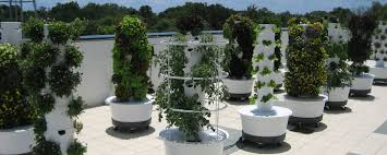 Commercial Tower Garden Farms are the future...talk about Farm to Table!