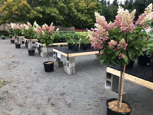 Gallery Image beautiful_pink_trees.jpg