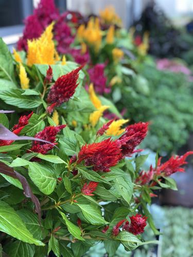 Gallery Image floral_4(1).JPG