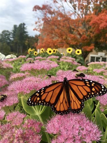 Gallery Image floral_5(1).JPG