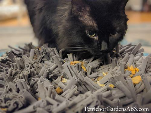 Enrichment is important for cats too