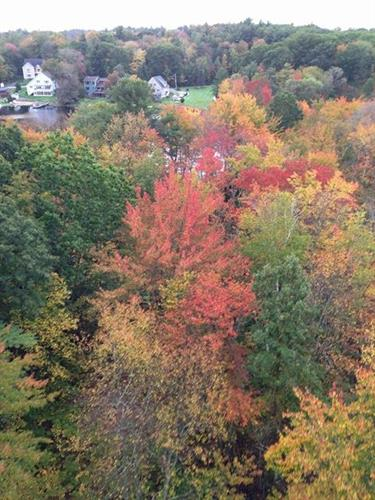 Gorgeous Fall Foilage