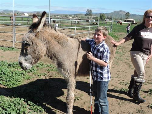 A blind child experiencing a donkey for the first time at STAT.  Jack is old and gentle, he was born with a club foot..