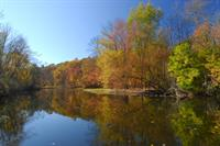 Gallery Image Fall_trees_with_water.jpg