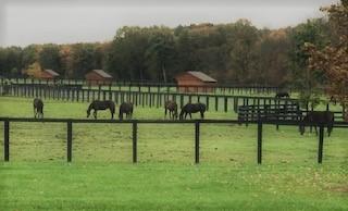 Gallery Image Horses.jpg