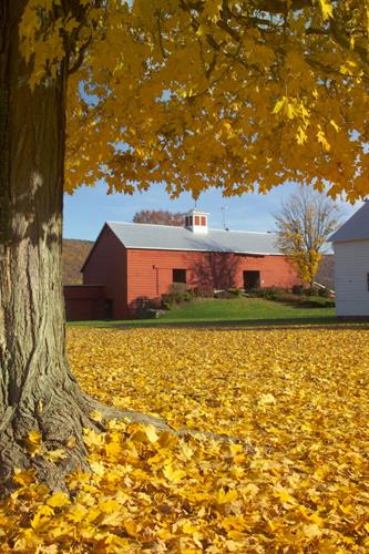 The beauty of the Blenheim- Gilboa Visitors Center can be enjoyed every season!