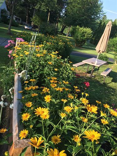 Gallery Image daisies1.jpg