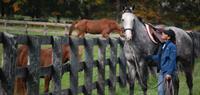 Gallery Image Horizontal_Grey_Horse_Blue_Jacket.jpg