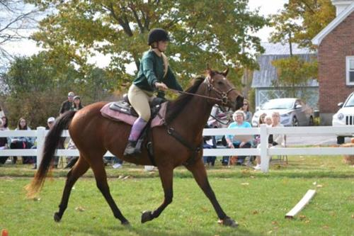 Gallery Image Horse_Expo_Picture.jpg
