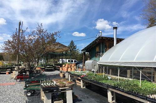 We carry lots of vegetable starts, herbs, perennials, annuals, shrubs, and garden decor, as well as hand-crated pottery.