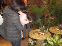 Visitors take a close look at some feeding monarchs during miSci's annual live butterfly house