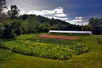 Denison Farm, 140 acres in Schaghticoke, NY. Conserved by ASA in 2011