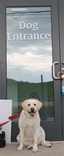 Lucy the Labrador modeling our dog entrance!