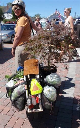 Gallery Image cargo_bike_with_tree.JPG