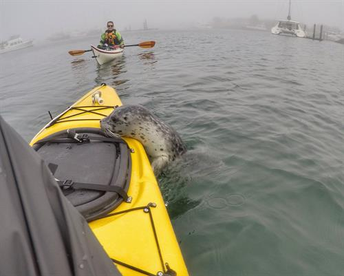 Curious seals can be a fun part of the trip.