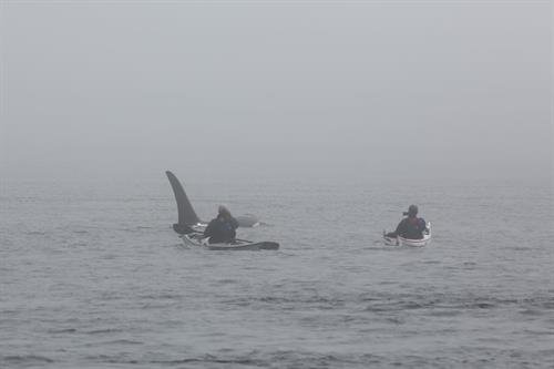 Orca whale encounter near Anacortes.