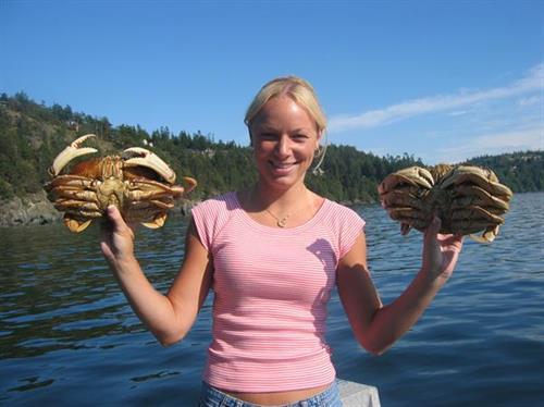 Dungeness Crab, San Juan Islands