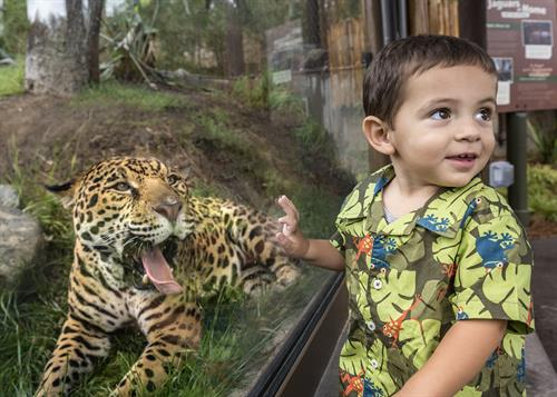 Get up-close views of jaguars, gorillas, giant lizards, river otters, and more.