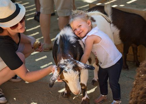 Pet and brush our kid-friendly goats at Muriel's Ranch contact yard.