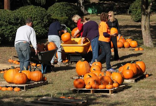 Volunteers unloading pumpkins for the Annual Pumpkin Patch