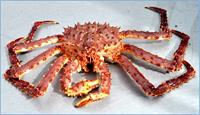 Whole Red Alaskan King Crab