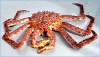 Whole Red Alaskan King Crab