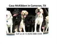 Casa McKibben (Dog Resort)