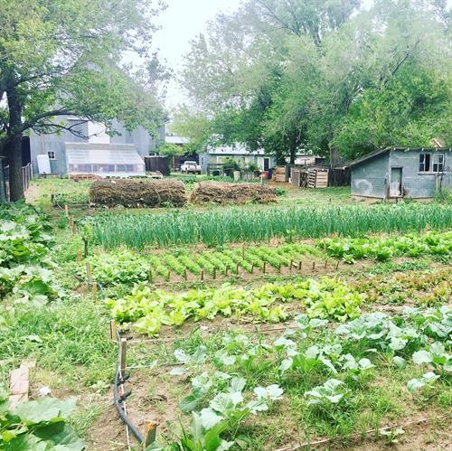 Heartland Farm Main Garden with Organically Grown Produce