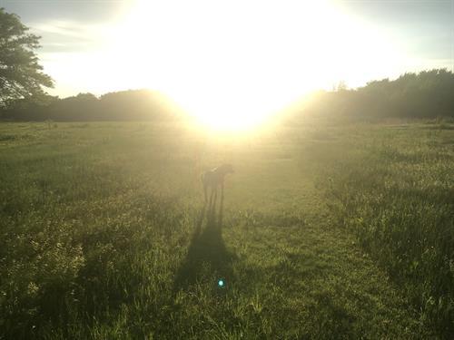 Heartland Farm Acres of Walking Trails