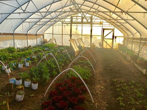 Heartland Farm High Tunnel with Organically Grown Produce