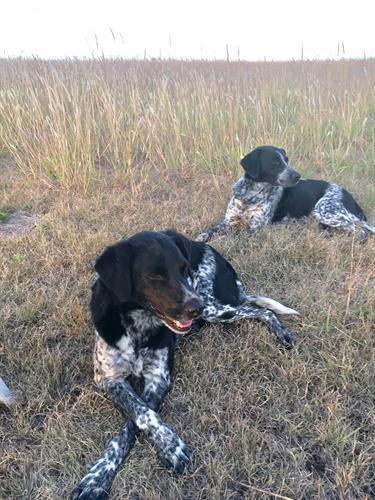 Heartland Farm Dogs