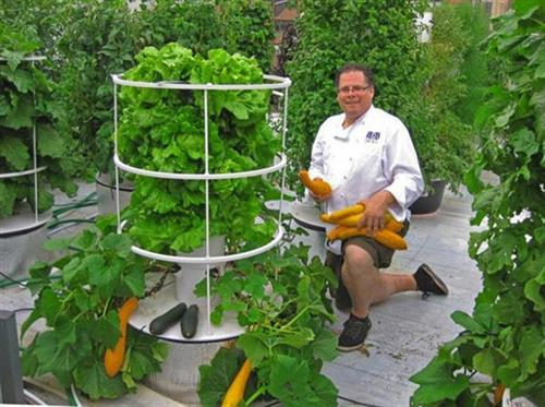 Roof Top Gardening ~ Chef John Mooney for Bell Book & Candle, was the first restaurant in Manhattan to install a rooftop aeroponic growing system. The restaurant harvests much of its fresh food from the rooftop Tower Garden® farm, designed by Future Growing LLC.
