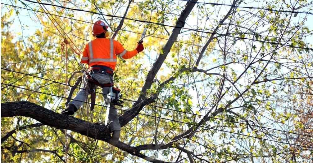 Gallery Image arborists_tree_doctor_elgin_il.jpg