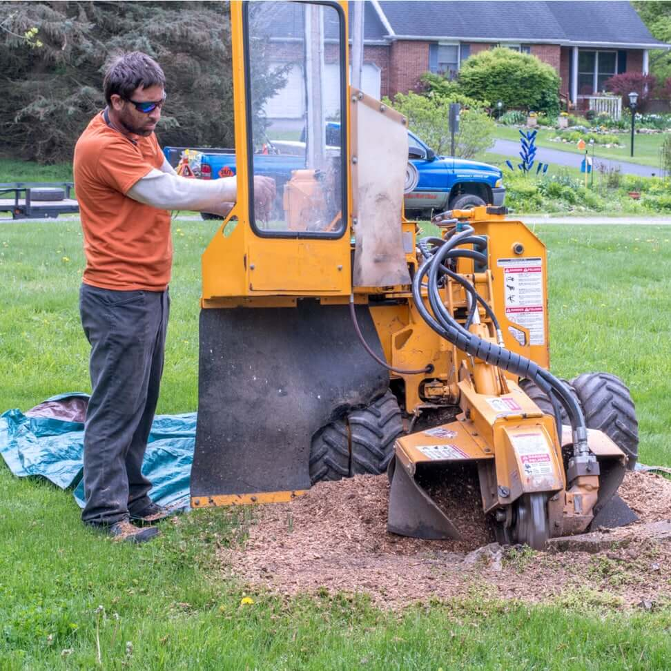 Gallery Image employee_using_tree_stump_grinding_machine_in_elgin.jpg