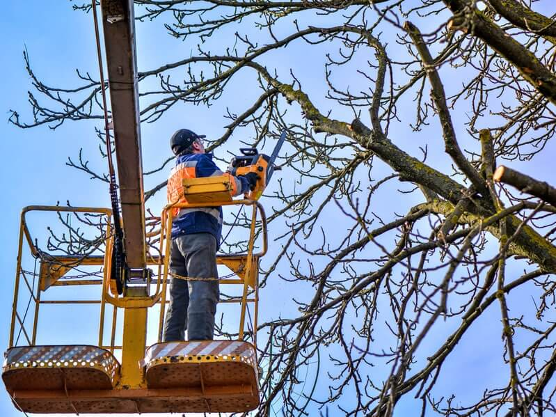 Gallery Image on_a_tree_lift_cutting_down_large_tree_branches_with_chainsaw.jpg
