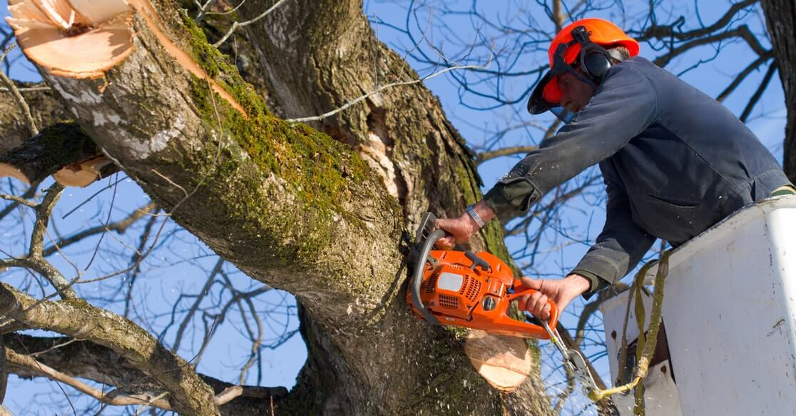 Gallery Image tree_cutting_service_elgin_il.jpg