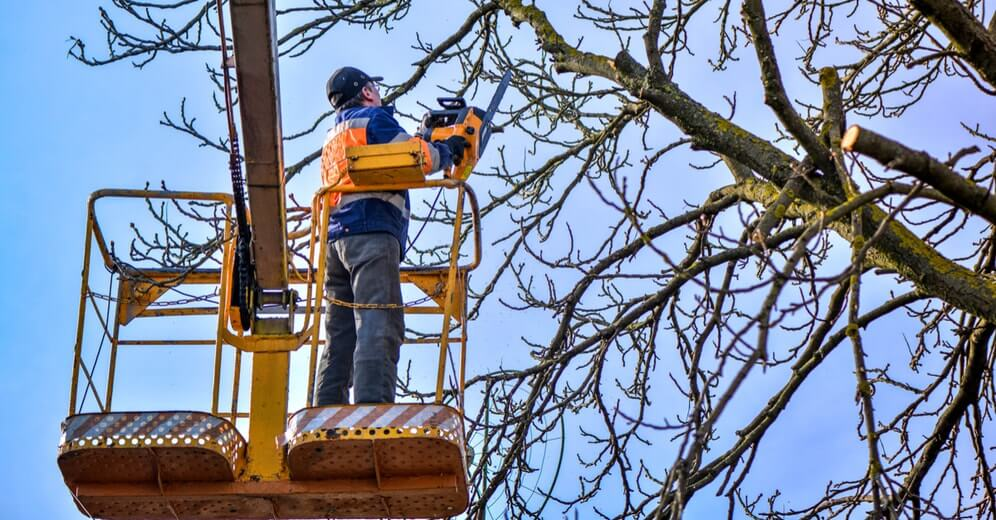 Gallery Image tree_pruning_in_elgin.jpg