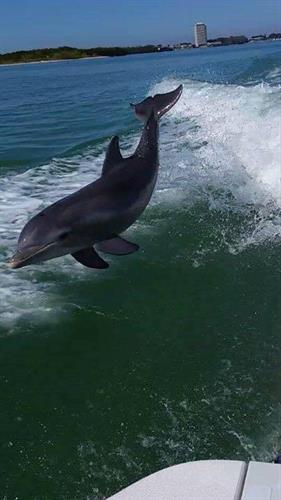 Gallery Image Dolphin_jumping.jpg