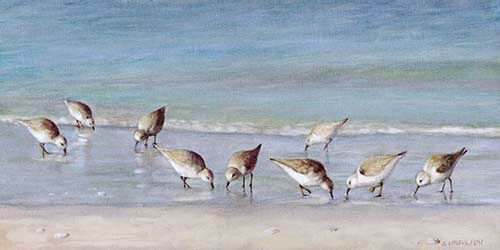 """Snowey Plover Sandpipers on Siesta Key Beach"", Oil Painting"