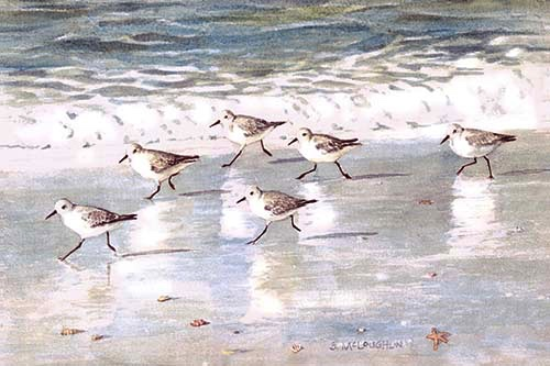"""Snowy Plover Sandpipers"", Watercolor"