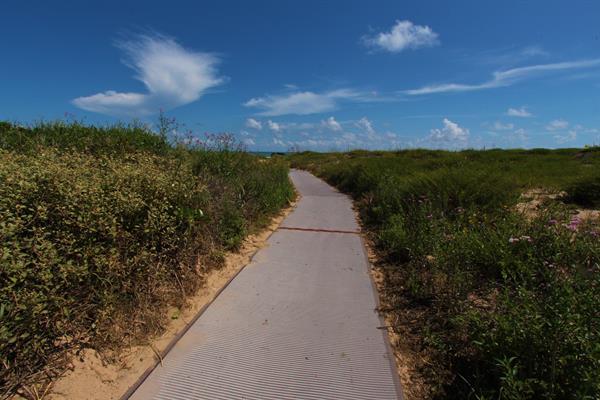 Gallery Image Beach_Access_Mat_II.JPG