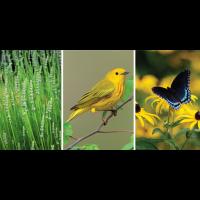 Spring Garden Lecture Series - EJC Arboretum
