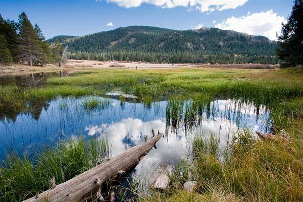 Truckee River Watershed Council